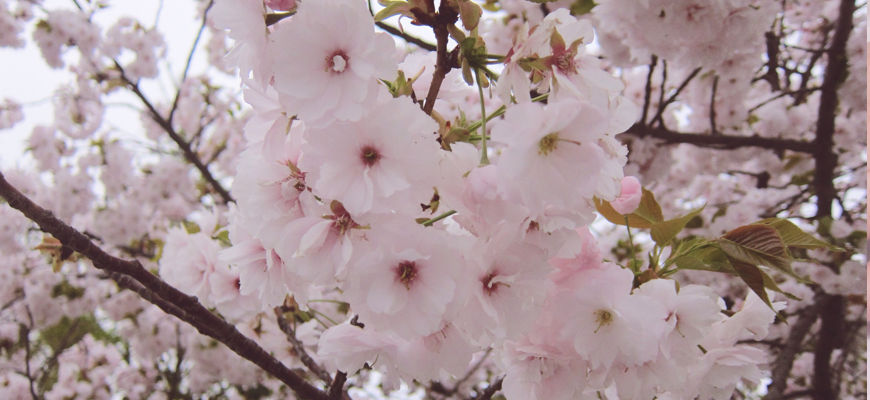 Osaka Spring 2014